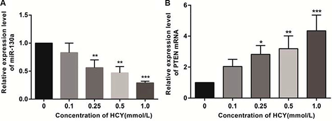 Effect of different doses (0, 0.1, 0.25, 0.5 and l.0 mmol/L) of HCY on the expressions of miR-130a and PTEN mRNA in HCAEC cells detected by RT-qPCR.