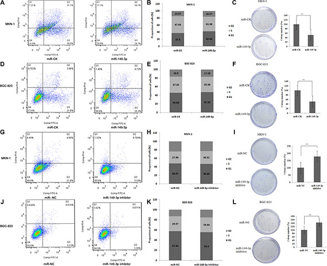 miR-149-3p induced cell apoptosis and suppressed cell cycle progression.