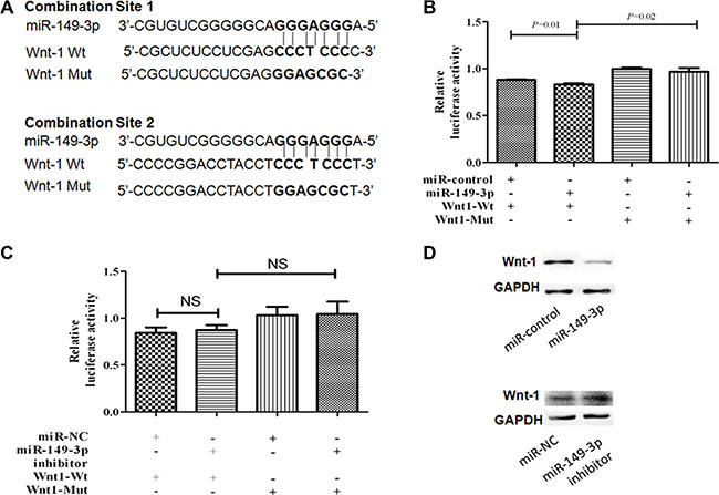 MiR-149-3p directly targets the 3′-UTR of Wnt-1 mRNA.