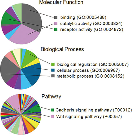 Gene ontology analysis of the 269 genes that had 2-fold increase of expression noise in BRCA, LIHC, LUAD, LUSC and COAD.