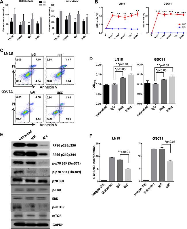 Rapid internalization of 86C is associated with induction of cell apoptosis and inhibition of cell proliferation.