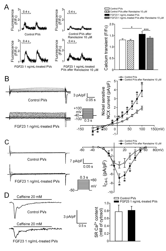 Intracellular calcium homeostasis and ionic currents in control and FGF23-treated PV cardiomyocytes.