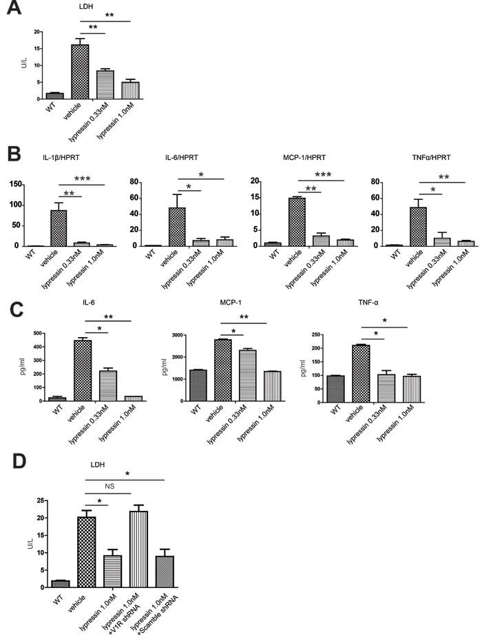 Lysine vasopressin protects primary hepatocytes from hypoxia/reoxygenation-induced injury