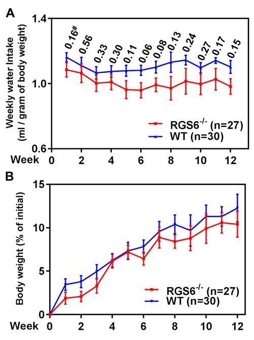 RGS6 loss does not alter BBN-water intake or body weight gain in mice.