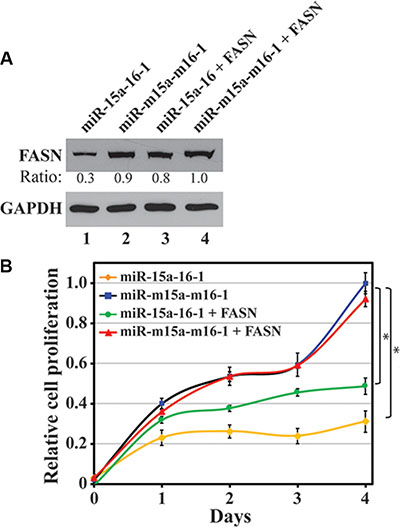 Restoration of miRNA-inhibited FASN expression and its effect on breast cancer cell proliferation.