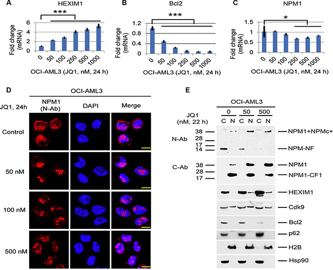 Effects of BET inhibitors on mRNA expression and the cellular distribution of NPM1/NPMc+ and HEXIM1 in OCI-AML3 cells.