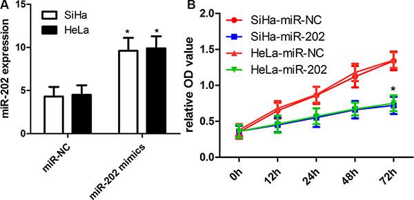 miR-202 inhibits CC cell proliferation.