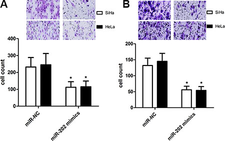 miR-202 inhibits CC cell migration and invasion.