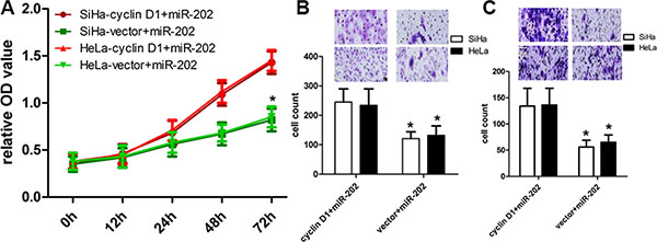 cyclin D1 overexpression reversed the inhibitory effect of miR-202 on CC cell proliferation, migration and invasion.