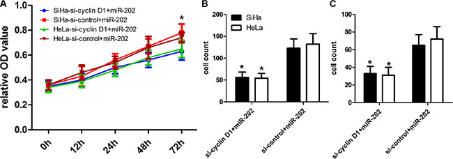cyclin D1 inhibition enhanced the inhibitory effect of miR-202 on CC cell proliferation, migration and invasion.