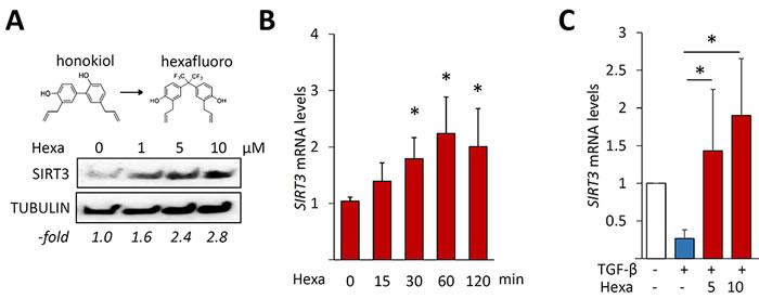 Hexafluoro stimulates SIRT3 expression.