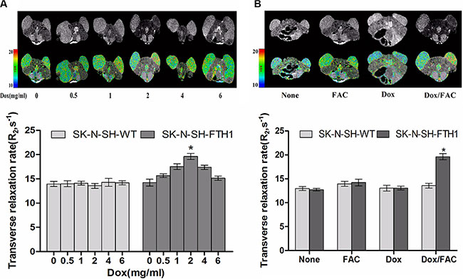 MRI validation of dose-dependent FTH1 expression in mouse tumors from subcutaneously inoculated cell grafts.