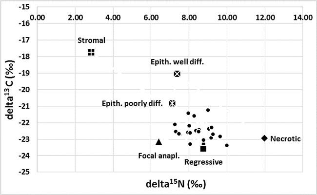 Variation in the isotopic composition of tumours in the WT group (n = 28, δ15N ±1.51, δ13C ± 1.27).