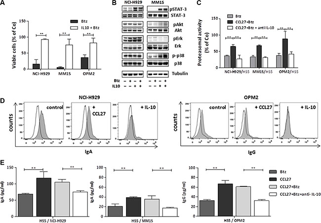 Impact of IL-10 on myeloma cell survival, signalling, proteasomal activity and presentation of surface immunoglobulins.