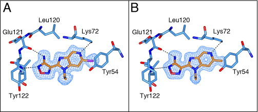 The binding mode of azabenzimidazoles 21a and 21e.