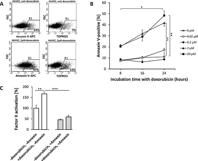 Doxorubicin-induced phosphatidylserine (PS) externalization on HUVEC enhances the procoagulatory activity of tTF-NGR.