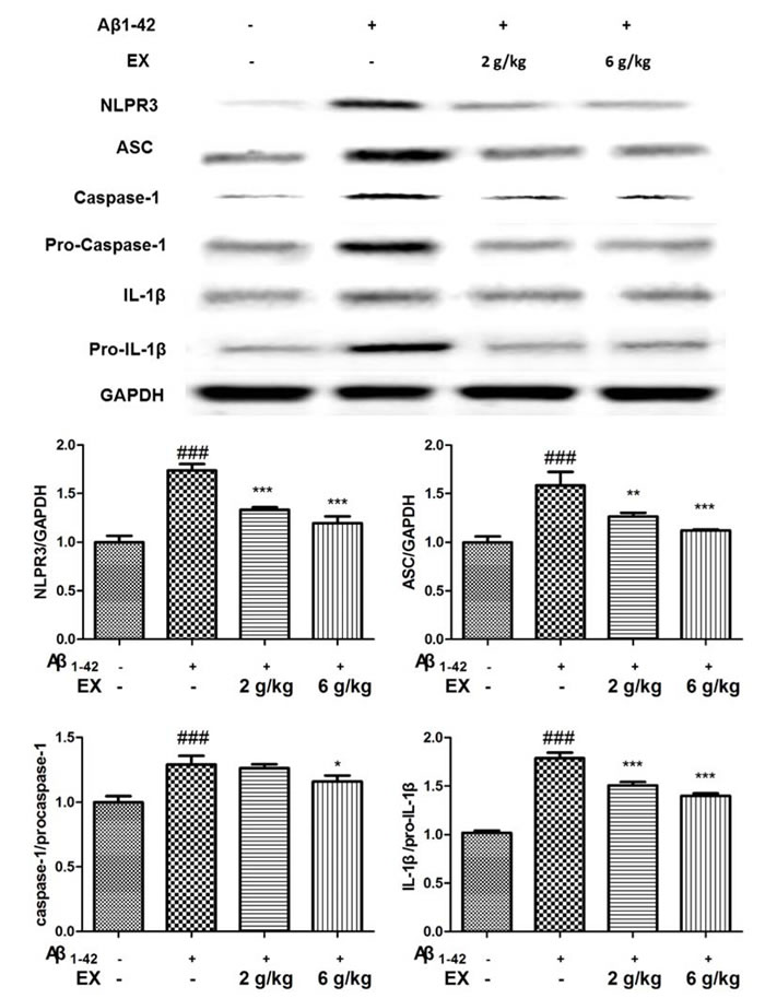Effects of EX on the activation of NLRP3 inflammasome-related protein of Aβ