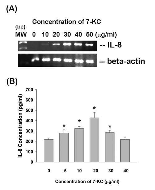 Effect of 7-KC on IL-8 expression and production.