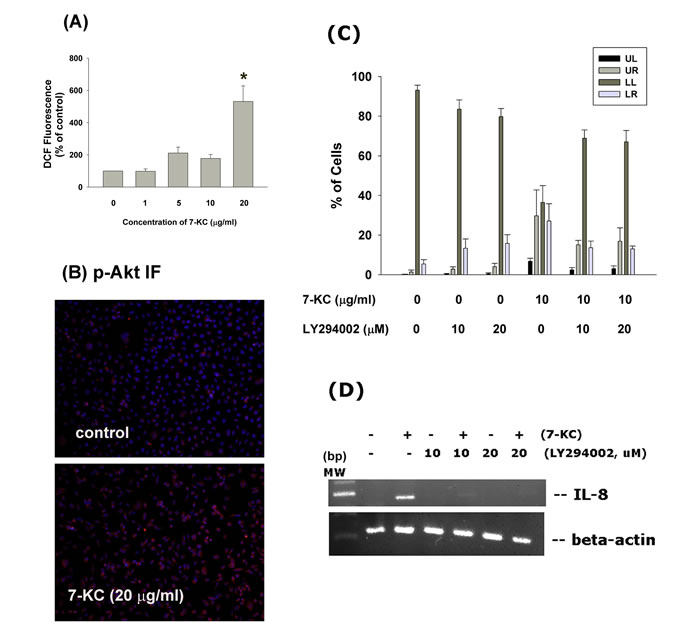 Effect of 7-KC on cellular ROS levels and Akt activation.