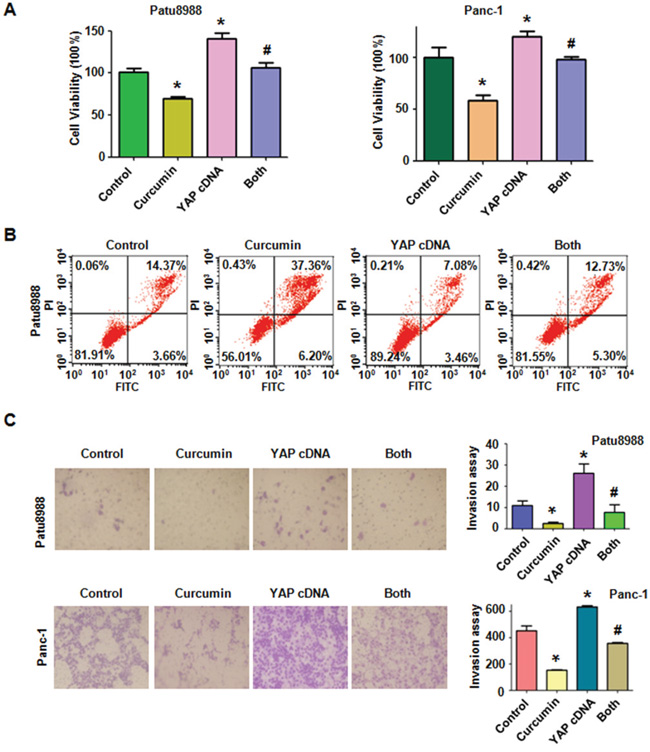 Overexpression of YAP triggered cell proliferation, abrogated cell apoptosis and promoted cell invasion in PC cells.