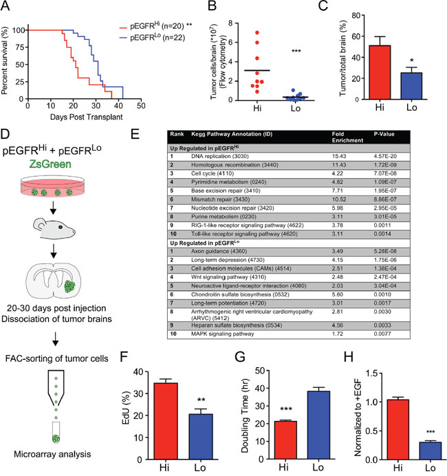 EGFRvIII activity associated with more aggressive tumors and gene expression signature.