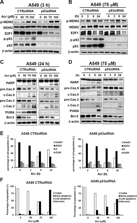 Acrolein induces apoptosis in A549 cells with knockdown of p53 via E2F1 degradation.