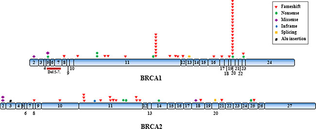 Distribution of the identified mutations along the BRCA1 and BRCA2 genes.