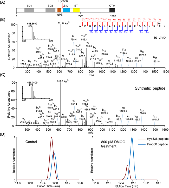 Identification and validation of Brd4 proline hydroxylation at Pro536.