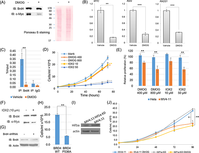 Functional characterization of proline hydroxylation pathway on Brd4 transcriptional activities and cell proliferation in MV4;11 cells.
