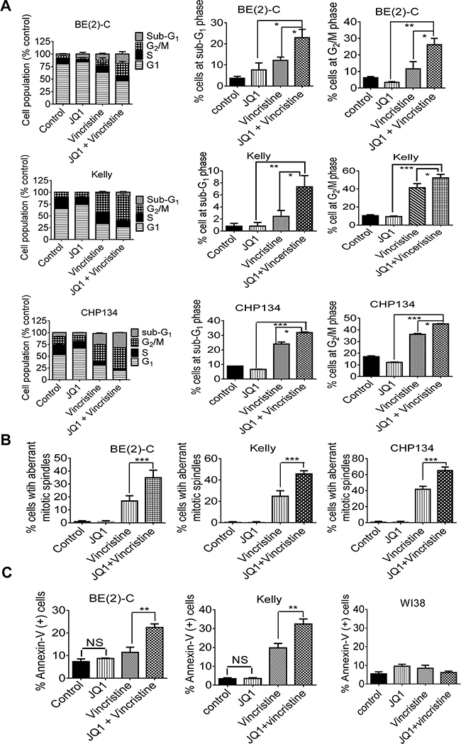JQ1 and vincristine synergistically induce neuroblastoma cell cycle arrest at the G2/M phase, aberrant mitotic spindle formation and apoptosis.