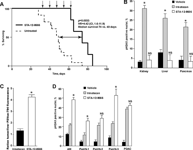Treatment with STA-12-8666 extends the survival of KPC mice from pancreatic cancer.