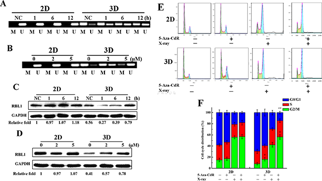 Methylation status of RBL1 promotor after X-rays or 5-Aza-CdR treatment and RBL1 expression in 3D A549 cells.