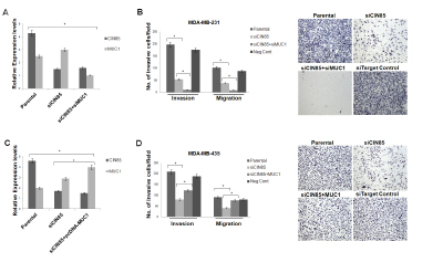 CIN85 and MUC1 co-regulate migratory and invasive properties of breast cancer cells.