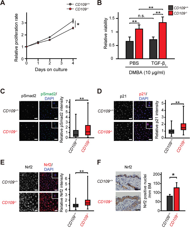 Cellular characteristics of primary mouse keratinocytes.