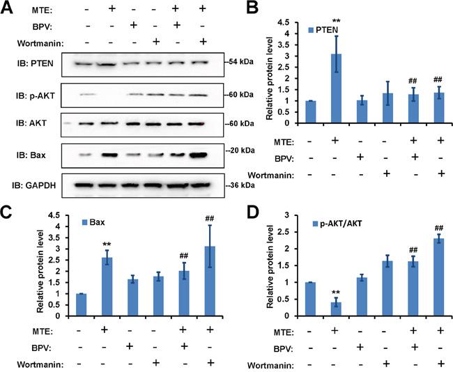 PTEN inhibitor BPV blocked MTE's effects in Jurkat cells, whereas PI3K inhibitor wortmanin enhanced MTE's effects in Jurkat cells.