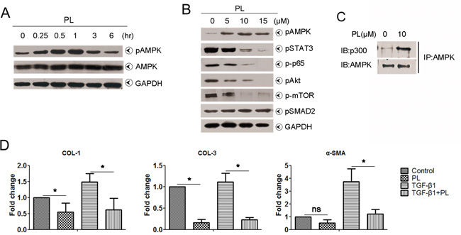 Effects of plumbagin on human hepatic stellate cells.