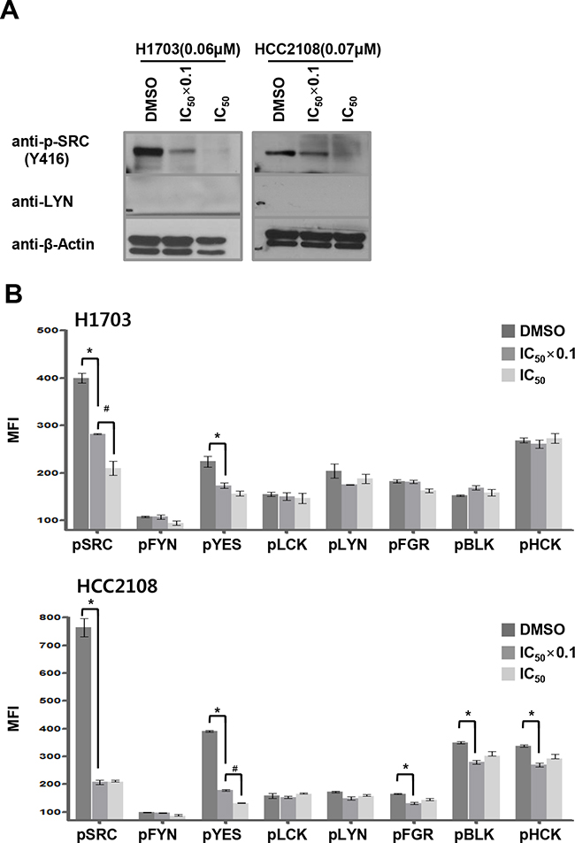 Dasatinib targets SRC and YES in LYN-negative lung ADC cells.