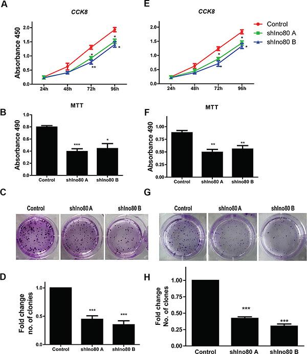 Ino80 knockdown inhibits cell proliferation.