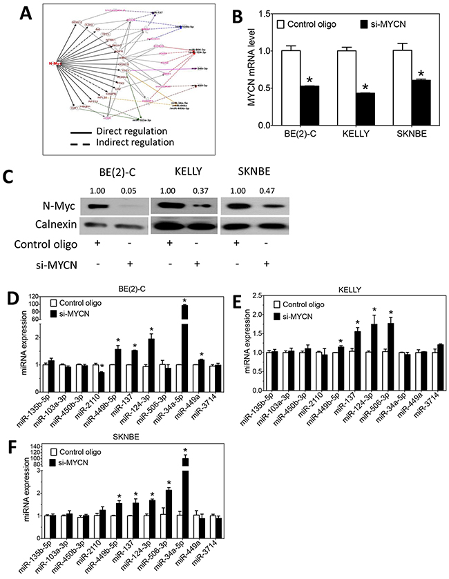 N-Myc regulates the expression of differentiation-inducing miRNAs.