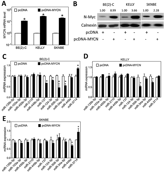 Effect of MYCN overexpression on the expression of differentiation-inducing miRNAs.