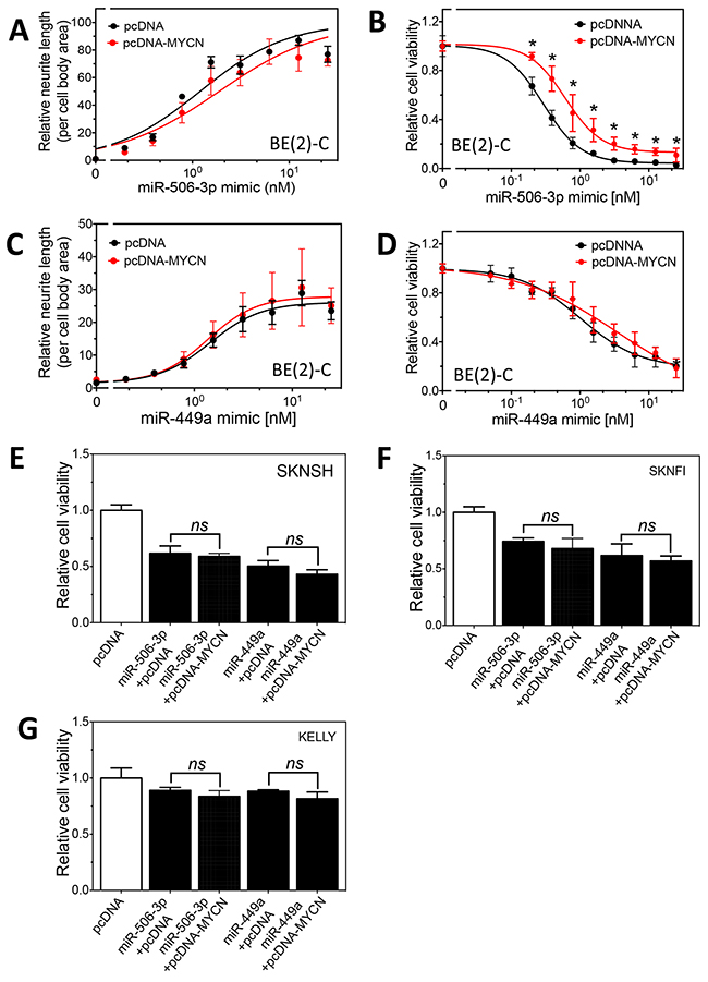 Effect of MYCN overexpression on the differentiation-inducing effect of miR-506-3p and miR-449a in neuroblastoma cells.