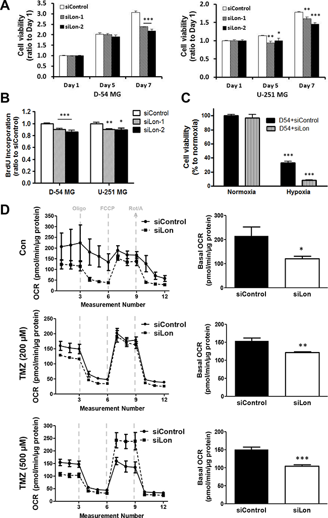Effect of Lon knockdown on cell proliferation and mitochondrial respiration in glioma cells.