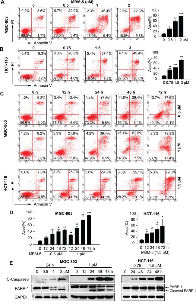 MBM-5 induces apoptosis.