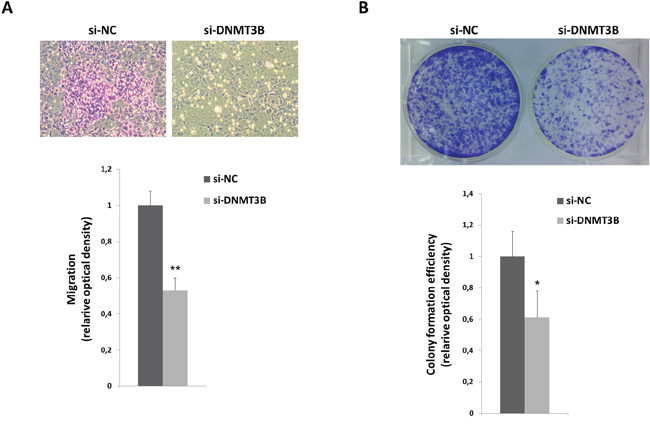 DNMT3B reduction correlates with altered migration and clonogenic ability of RD cells.
