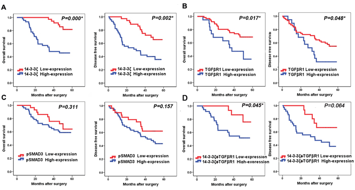 Association of 14-3-3ζ, TGFβR1 and pSMAD3 proteins with survival of lung SCC patients.