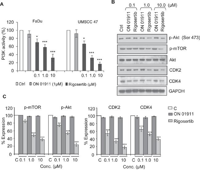 Rigosertib blocks PI3K/Akt/mTOR signaling pathway in HNSCC cell lines.