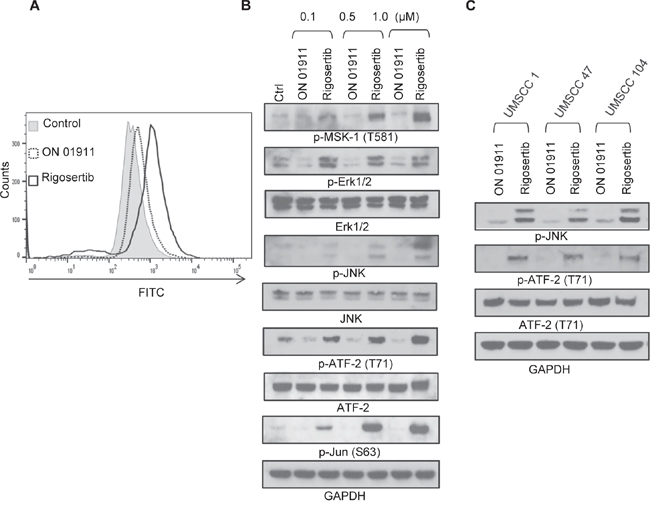 Rigosertib induces ROS generation and activates JNK pathway signaling in HNSCC cell lines.