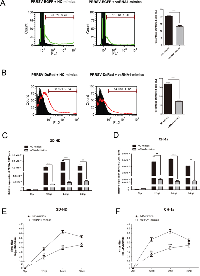 PRRSV-vsRNA1 exhibits antiviral activity in different PRRSV strains in vitro.