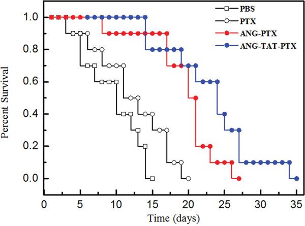 Anti-tumor efficacy of conjugate on human tumor bearing mice.