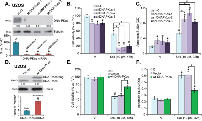Salinomycin's sensitivity in OS cells is increased with DNA-PKcs knockdown, but decreased with DNA-PKcs over-expression.
